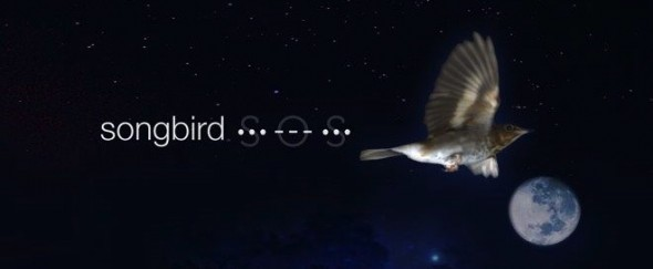 songbird_sos. image with bg.from Su's website_cropped
