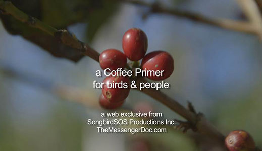 A Coffee Primer for Birds and People